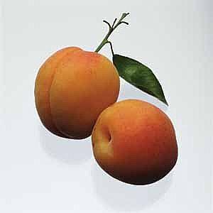 apricot-main_full